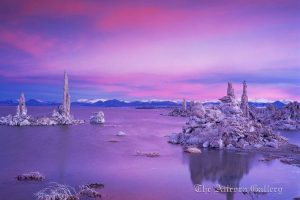 Pallid Eventide , Mono Lake, California