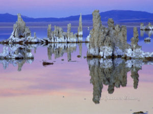 Apparitions at Dawn, Mono Lake, California